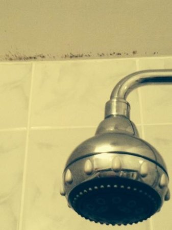 Acorn Lodge Gatwick : damp in the bathroom