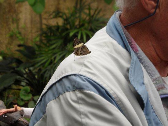 Butterfly Park of Benalmadena : Vlinders strijken neer op je schouder en blijven daar een tijdje zitten .