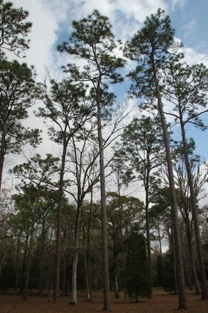 Withlacoochee State Forest: A True Suburban Wlderness