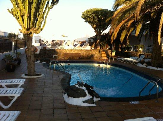 Apartamentos Los Tulipanes : poolside view