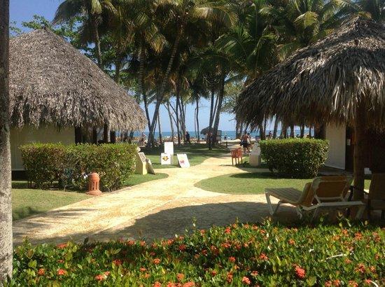 Iberostar Costa Dorada : La végétation
