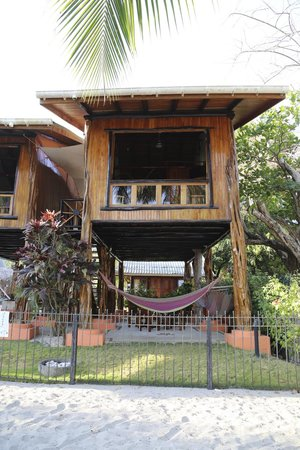 Samara Tree House Inn : looking at our treehouse from the beach