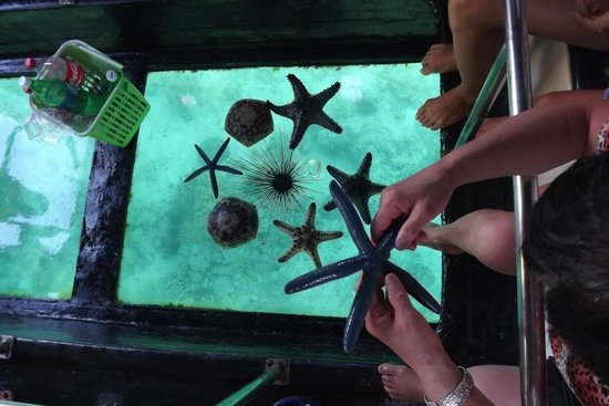 Glass Bottom Boat Boracay day tours: Starfish brought onboard to see