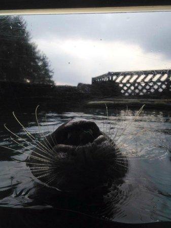 The Scottish SEA LIFE Sanctuary: Love this pic