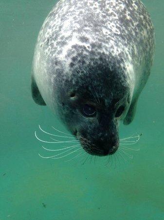 The Scottish SEA LIFE Sanctuary: Beautiful eyes