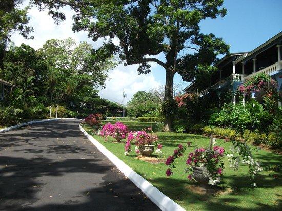 Jamaica Inn : Driveway