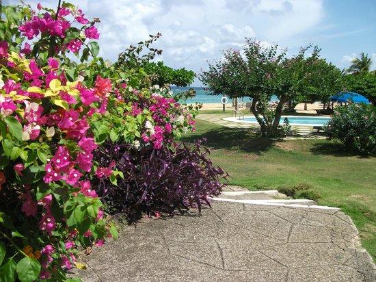Jamaica Inn : Gardens/beach