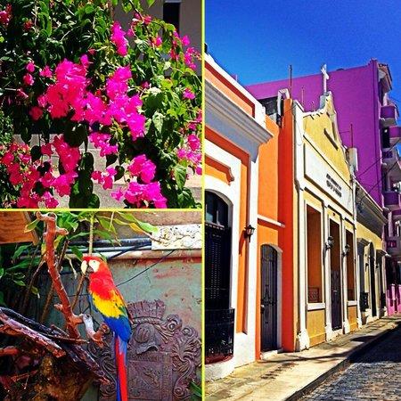 The Gallery Inn : Beautiful Old san Juan