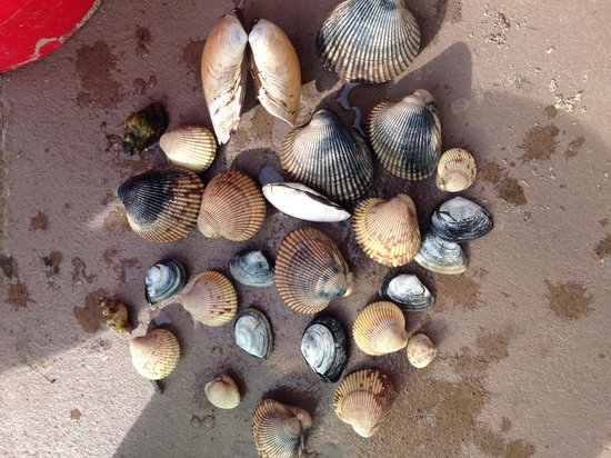 Harborview Inn & RV Park: Clams