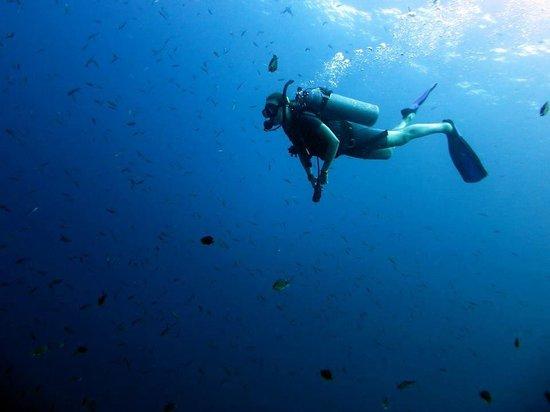 DJL Diving: DJL