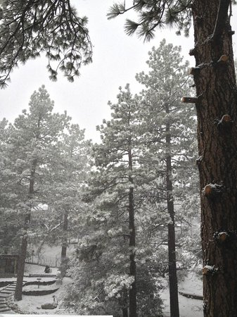 The Grand Idyllwild Lodge : Awoke to snow
