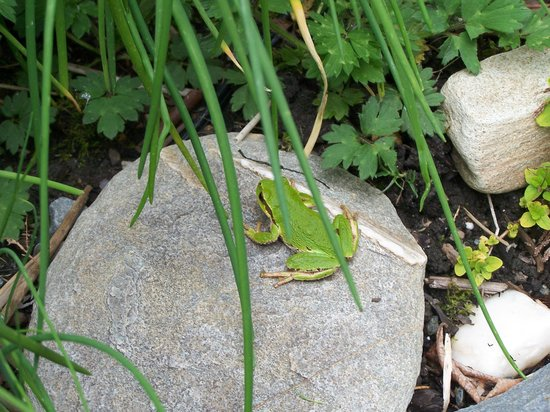 The Homestead Cabins : Tree Frog in garden