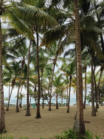 ClubHotel Riu Bachata : Sur la plage