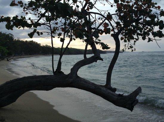 ClubHotel Riu Bachata : La mer