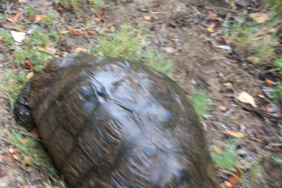 Featherbed Nature Reserve: Tortoise