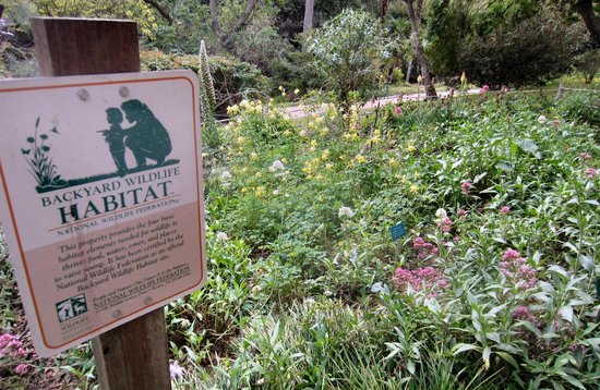 Mildred Mathias Botanical Gardens : Amateurs are shown how they can create a similar environment at home