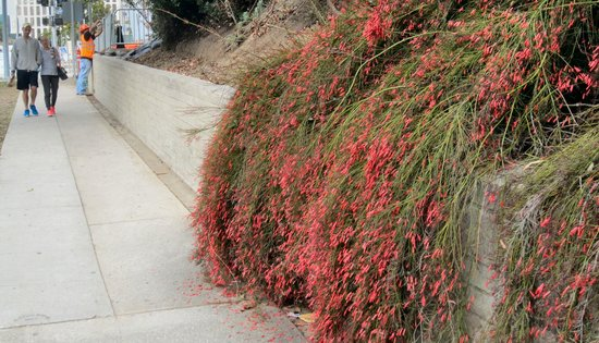 Mildred Mathias Botanical Gardens : Color from the garden spills over onto the city sidewalk
