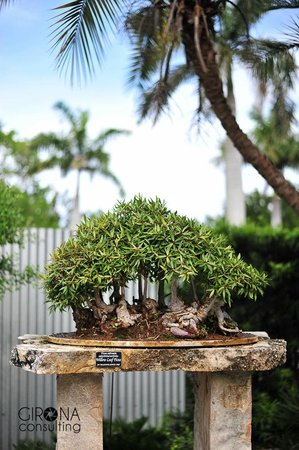 Heathcote Botanical Gardens: Beautiful Bonsai.There were so many to look at and enjoy. I photographed only a few of them.