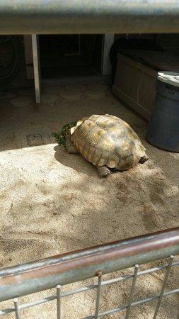 Brevard Zoo: Turtle
