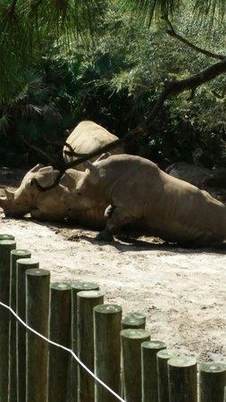 Brevard Zoo: Rhinos