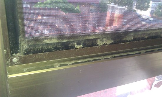 Apartments on Chapman: Window mold