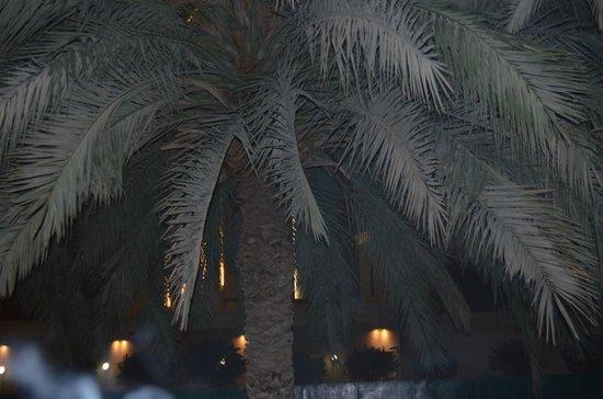 Le Meridien Dubai Hotel & Conference Centre : Paradise tropical