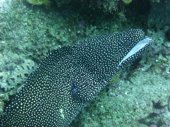 Ticabo Diving Centre: Murène gueule blanche