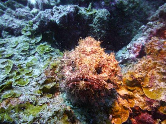 Ticabo Diving Centre: Poisson pierre