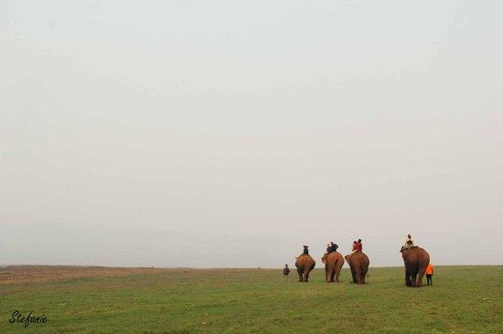 Ganesha Park : Balade du matin dans la brume