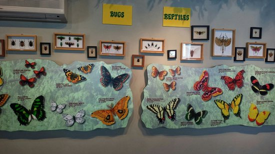 The Original Mackinac Island Butterfly House & Insect World: Bugs too!