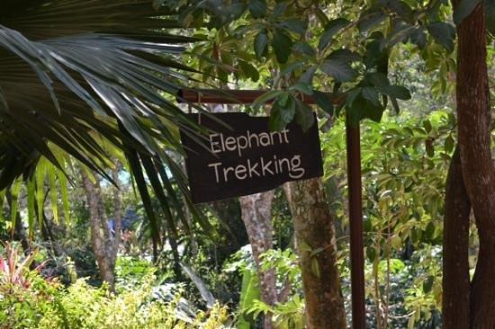 Siam Safari: elephant trekking