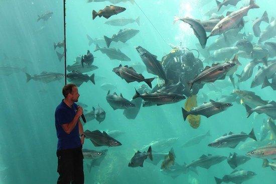 Atlantic Sea Park: Рассказ о видах атлантических рыб