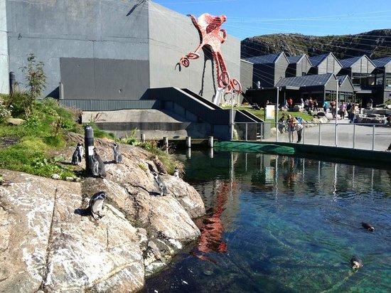 Atlantic Sea Park: Пингвины