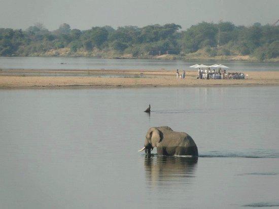 Tiger Safaris: A resident Elephant in the Zambezi river