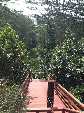 Koloa Zipline: zipline through the canopy