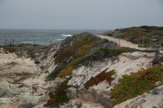 Asilomar State Beach: Flowers along the trail