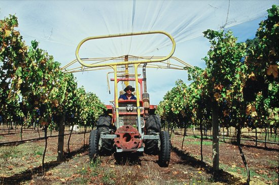 Cape Grace Wines: Netting the vines
