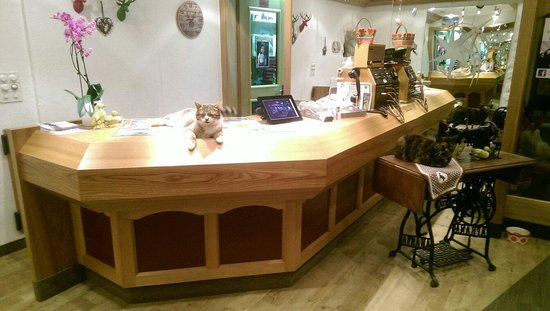 Hotel Bristol: The cat staff 'manning' the desk at night
