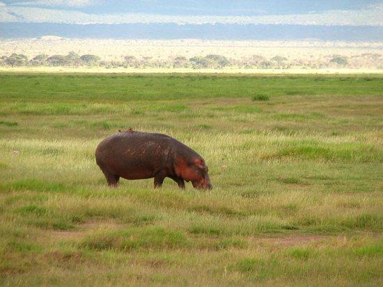 Amboseli National Park: редкое зрелище