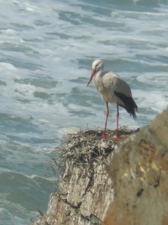 Herdade do Touril: storks on the coast