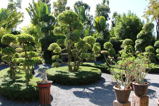 Phuket Botanic Garden : Бонсайчики
