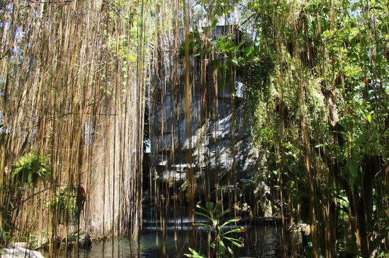 Phuket Botanic Garden: Воздушные корни
