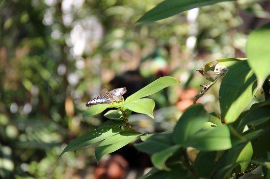 Phuket Botanic Garden: Сад бабочек