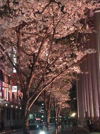 Mandarin Oriental, Tokyo: Cherry blossoms at night