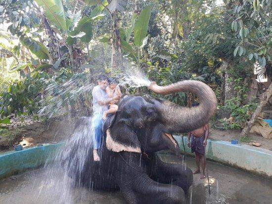 Springdale Heritage: during our visit to elephant park