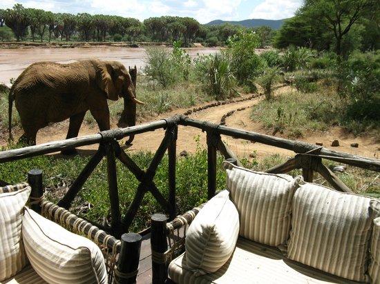 Elephant Bedroom Camp: Elephant walking through camp