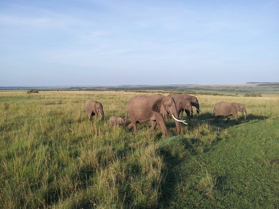 Nalepo Mara Camp: As seen on one of our drives, with a week-old baby Elephant