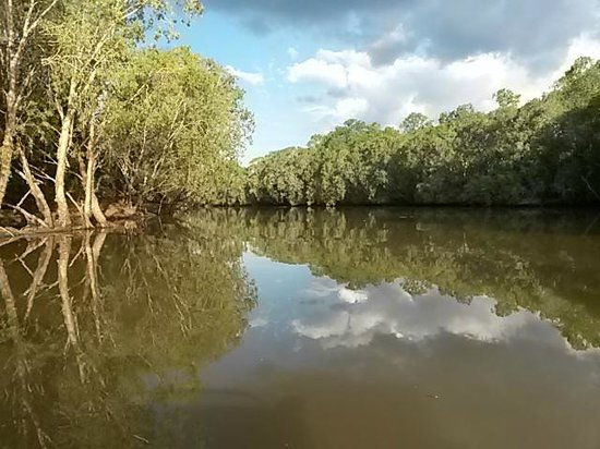 Mary River Wilderness Retreat & Caravan Park: The river self drive boat tour