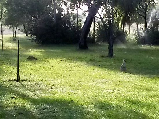 Mary River Wilderness Retreat & Caravan Park: Wallabies