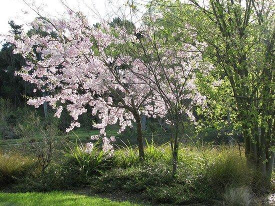 Timara Lodge : Spring Blossom